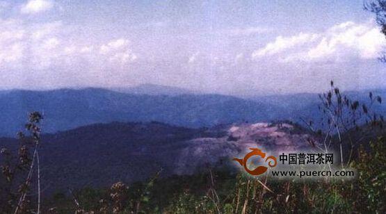 西双版纳六大古茶山
