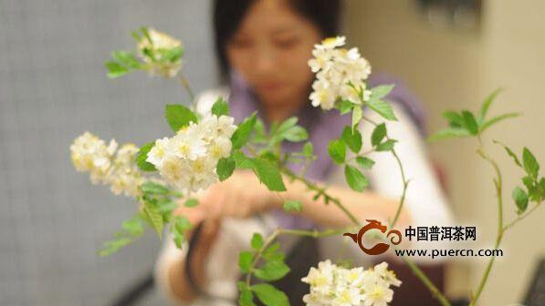 中国茶道为何不能向大众普及
