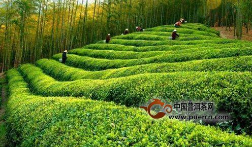 """杭州余杭径山镇""""中国茶圣节"""""""