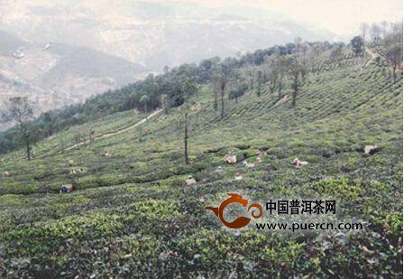 南涧县茶产业助推休闲观光农业发展