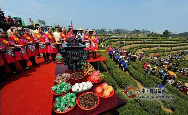福州首采2015年春茶 开制福州茉莉花茶