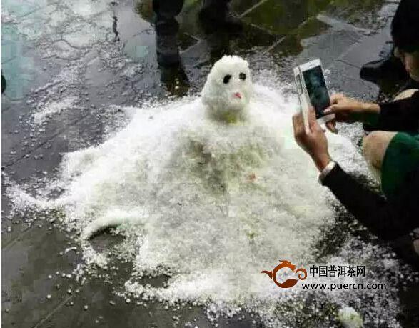 【茶山热点】冰雹来咯,春茶很受伤?