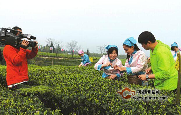 泸州纳溪跻身四川茶产业十强