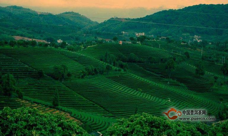 普洱茶投资分析:市场消耗决定茶市冷热