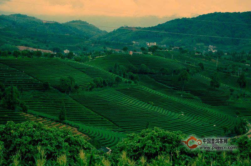 普洱茶和山水情缘
