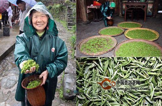 休宁新安源银毫有机茶开采春茶 每斤售价450元