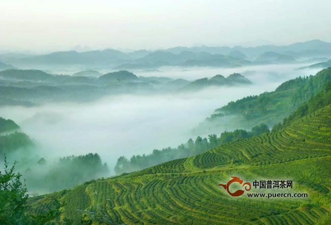 普洱茶产地-革登茶山