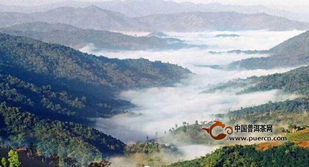 龙园茶业产业链建设迈上新台阶
