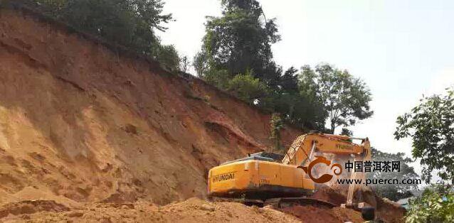 贺开进老班章村路今天发生塌方,上百棵古树被毁!