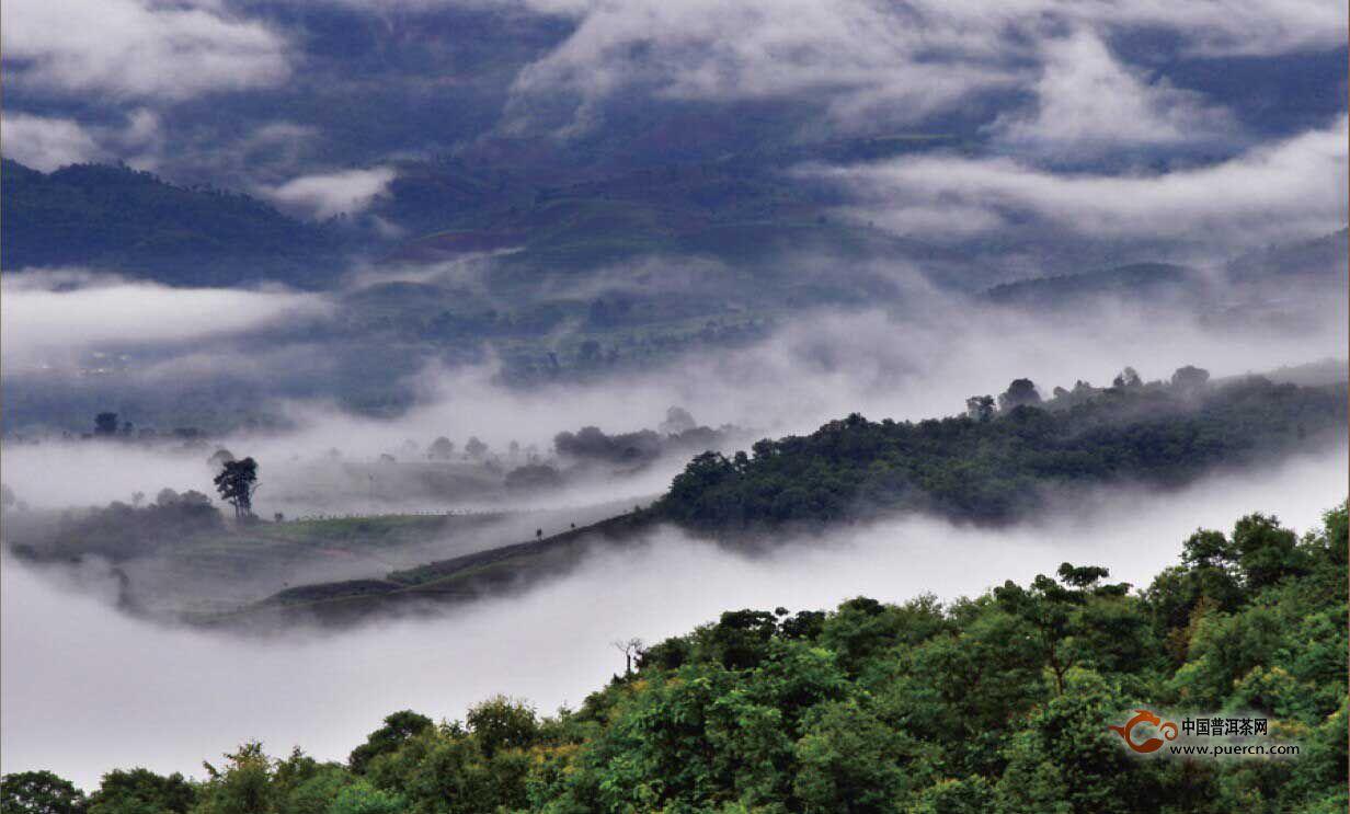古六大茶山的环境是什么样的?