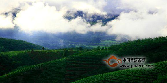 普洱茶原产地