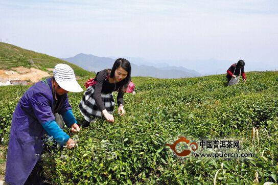 """""""茶缘阁""""上线,开启全民创业模式"""