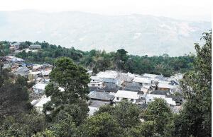 景迈茶山的村庄曾经默默无闻,随着普洱茶的走红而变得富裕。拥有茶树的家家户户都建起了新房 本版图片都市时报记者文若愚