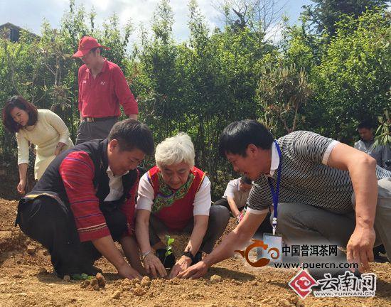 云南凤庆锦秀茶王拍出2015普洱茶最高价:350万元/kg