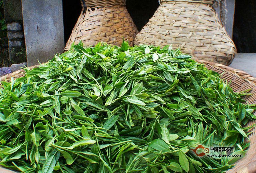 爱茶的快看:2015年普洱春茶价格预测