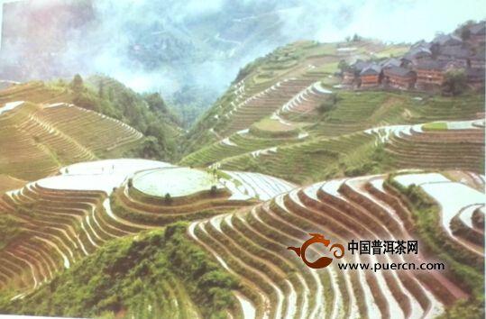 【看点普洱】云南茶区的特色 古树古茶树