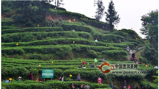 旅游,阳春三月到青城山采道茶