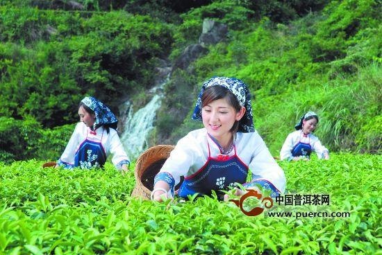回顾2014年,闽南茶市掀起的四大热潮