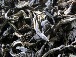 千年茶树新茶,竞拍价飙升上百万每公斤