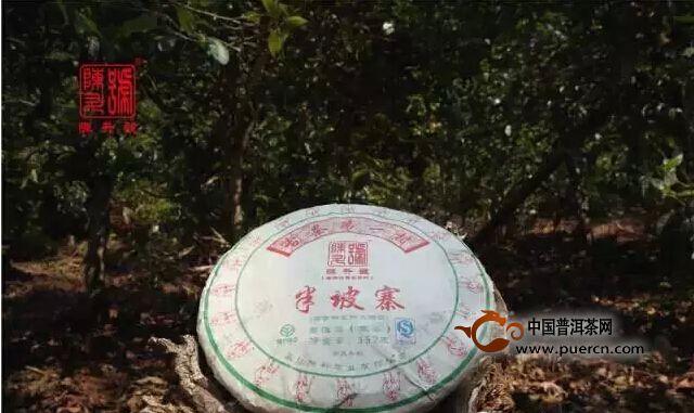【半坡寨】国有林里的大树茶赏析