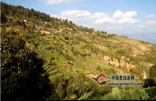 七彩云南2015春古潜力山头之——白莺山