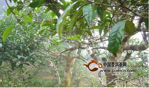 果树 树 植物 500_298