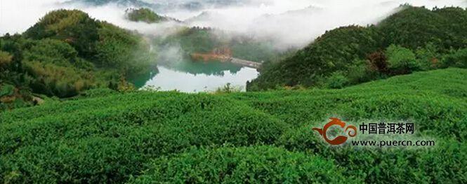 我是福鼎太姥山上的白牡丹
