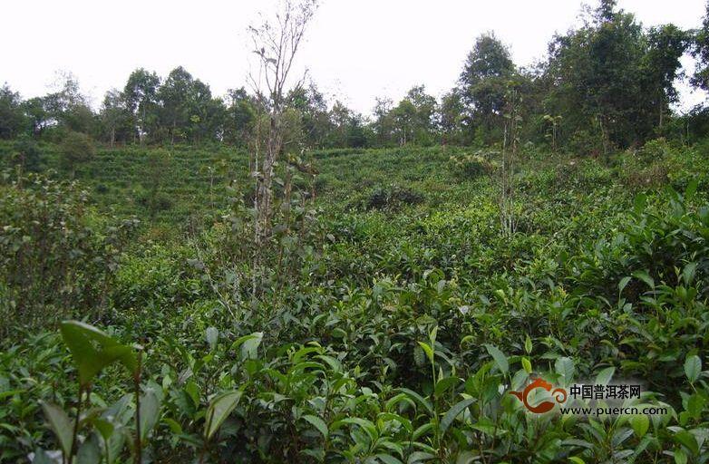 普洱茶村寨之大园自然村