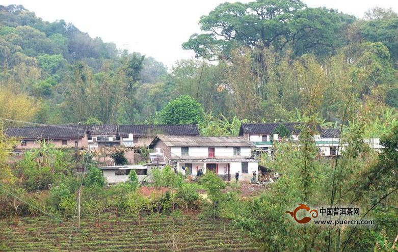 普洱茶村寨之易武么连自然村