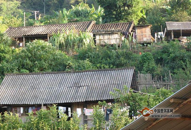普洱茶村寨之勐腊秧林自然村