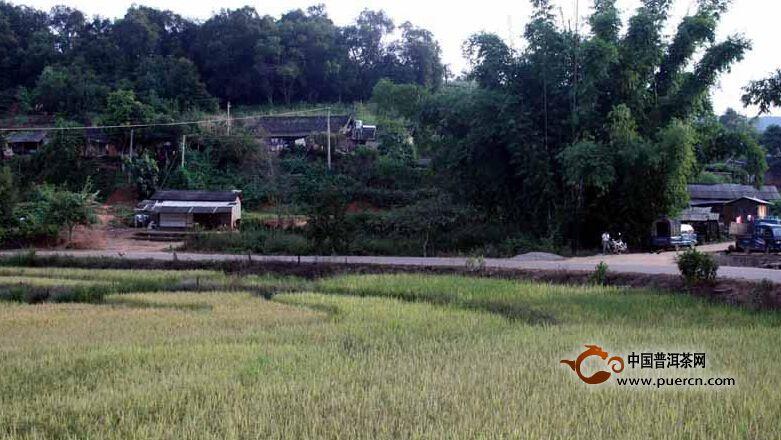 普洱茶村寨之麻立树村