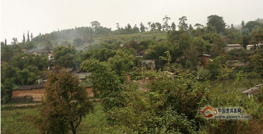 普洱茶村寨之洛科新寨村