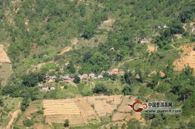 松坡林村情概况