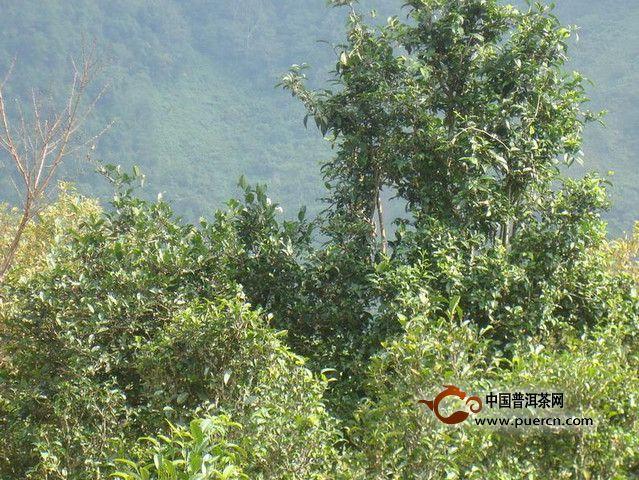 景东锦屏镇情况介绍——普洱茶产地