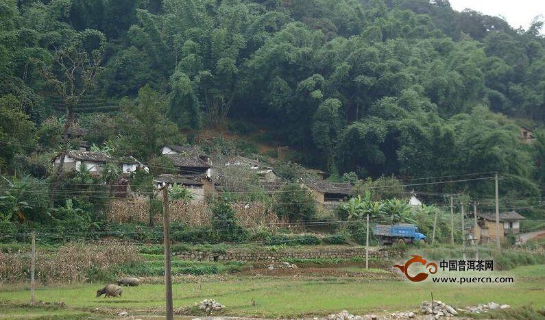 联珠镇勇溪村介绍--普洱茶产地