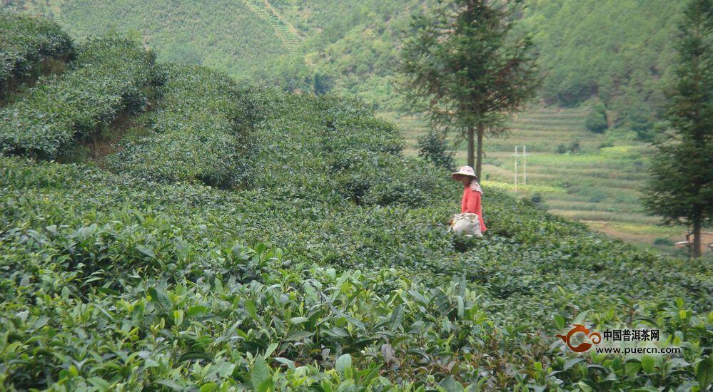 首頁> 普洱茶專題 > 中國普洱茶網幫助您了解普洱市墨江哈尼族自治縣