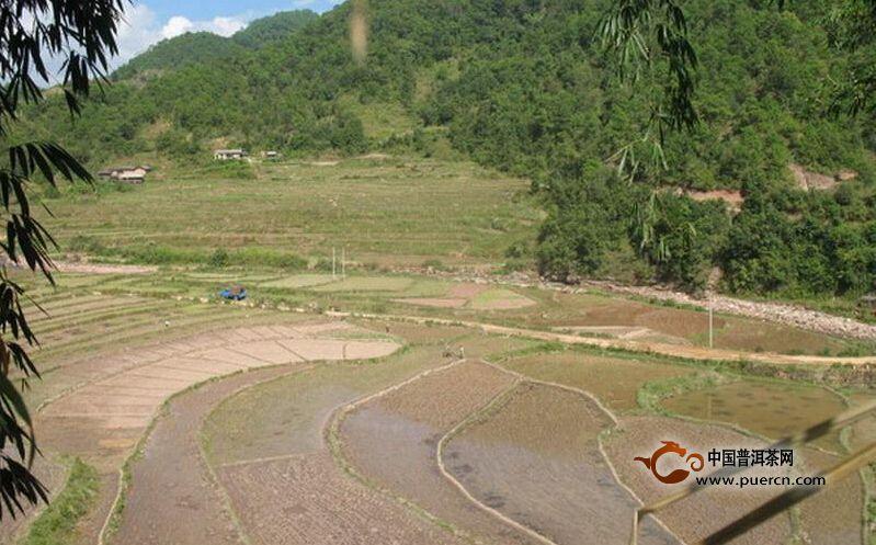 民乐镇大村村--普洱茶产地