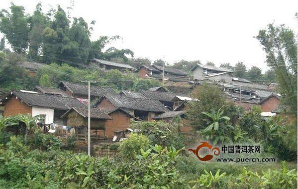 龙塘村介绍--普洱茶产地
