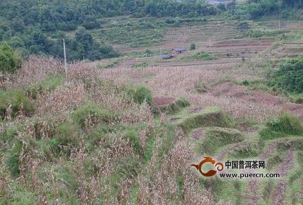 威远镇龙塘村人文地理