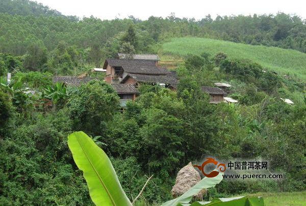 永平镇团结村介绍--普洱茶产地