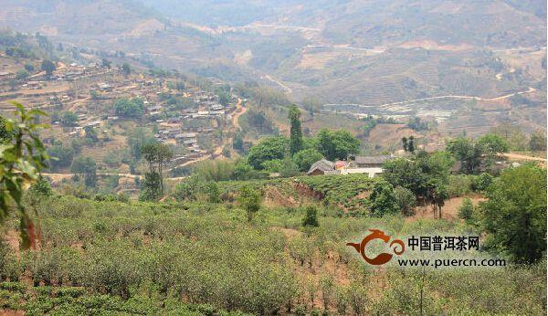 勐库东半山:山头茶【两那一坝卡】