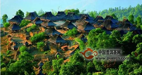 布朗山曼新龙老寨的古树茶和风景