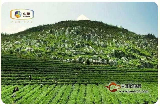 中粮百年木仓生态黑茶开年力作——灵猴献瑞生肖茶即将珍藏上市!