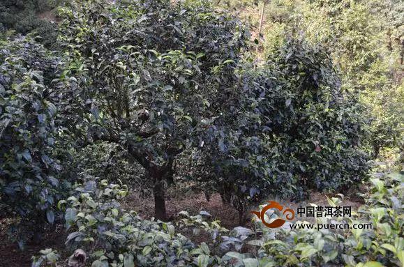 勐库西半山:名寨豆腐寨