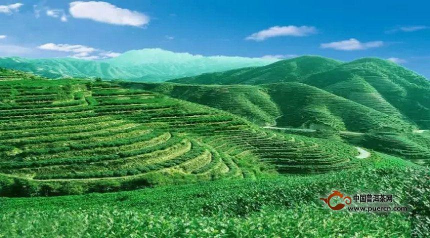 数据报告:2015年我国茶叶产销形式通报