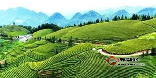 2016中国茶叶区域公用品牌价值十强出炉