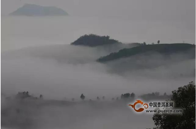 中茶普洱北京微茶会(第122期)《易武熟茶》