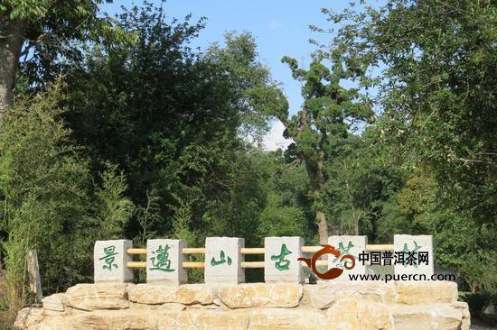 久负盛名的千年茶山——景迈山