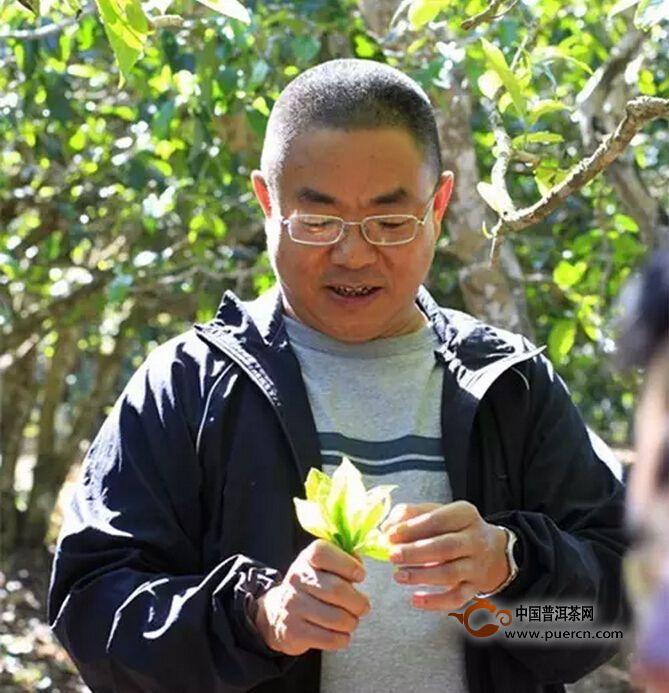"""【杨世华】 他的古茶园非要""""两休两采自然天养"""""""