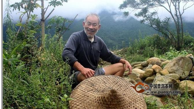 云南采茶人茶山上的百味人生